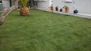 pose de pelouse en plaquage