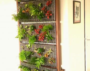 Mur végétalisé dans les bureaux de RAS à Toulouges
