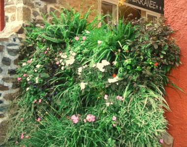 Création d'un mur végétal extérieur – Hôtel Méditerranée Collioure