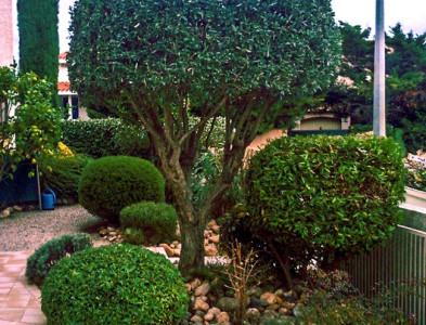 Coupes d'arbustes
