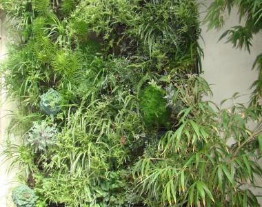 Merci pour notre mur végétalisé