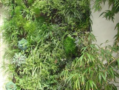 Mur végétalisé extérieur