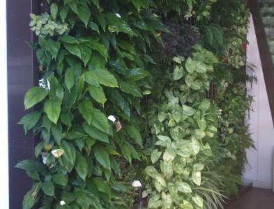 Mur végétalisé intérieur