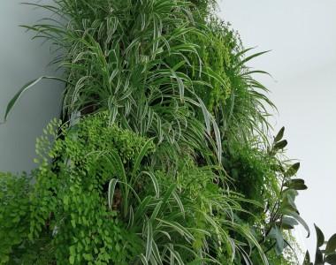 Mur végétalisé chez Allianz Assurance