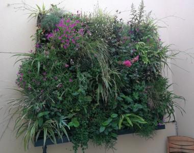 Création d'un mur végétalisé à Saleilles