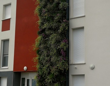 Mur végétal extérieur – Alénya 2017