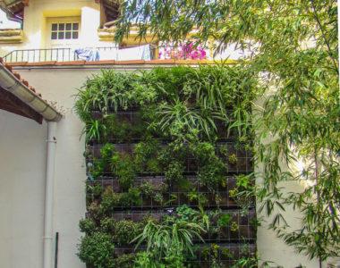 Mur végétalisé extérieur -client particulier
